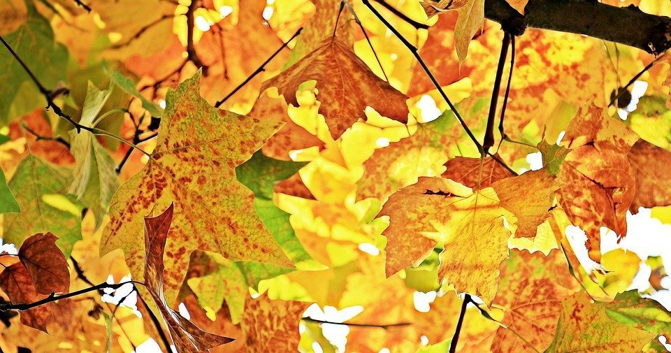 5 tendencias para elegir los materiales de tu hogar este otoño